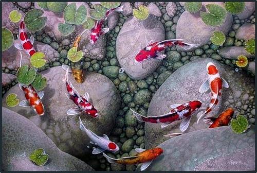Карпы кои: разновидности рыб