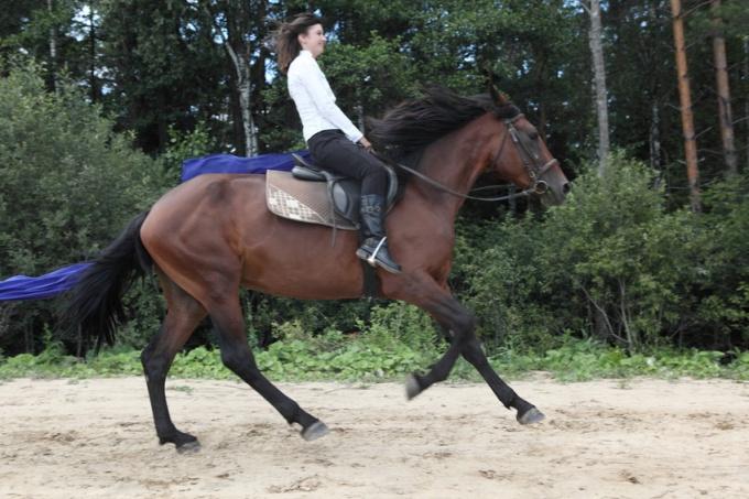 Как научиться ездить на лошади верхом