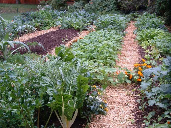 10 советов для огородников
