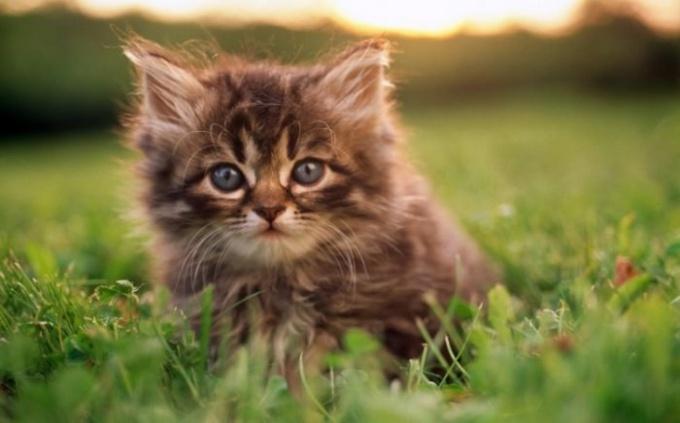 Кошка всегда падает на лапы - это правда