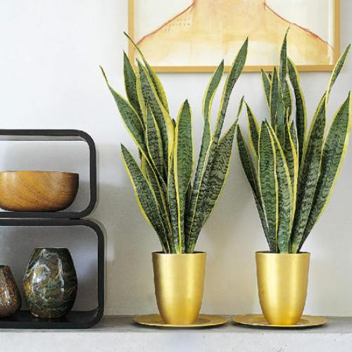 Выбираем неприхотливые растения для дома