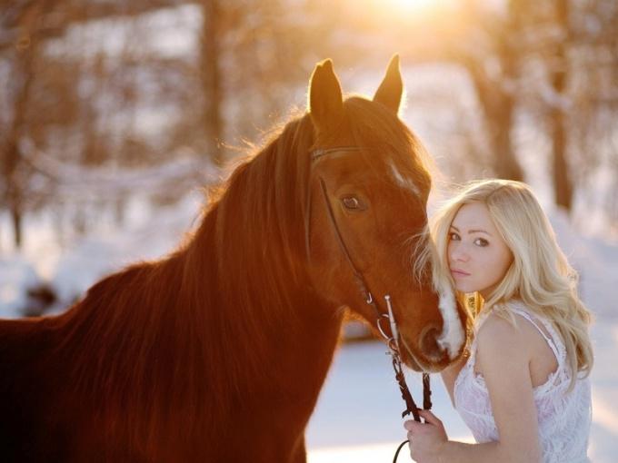 Правильное поведение при фотографировании с лошадью