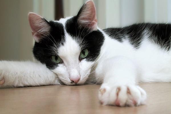 Избавляемся от кошачьего запаха