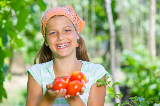 Ранние сорта помидоров для открытого грунта