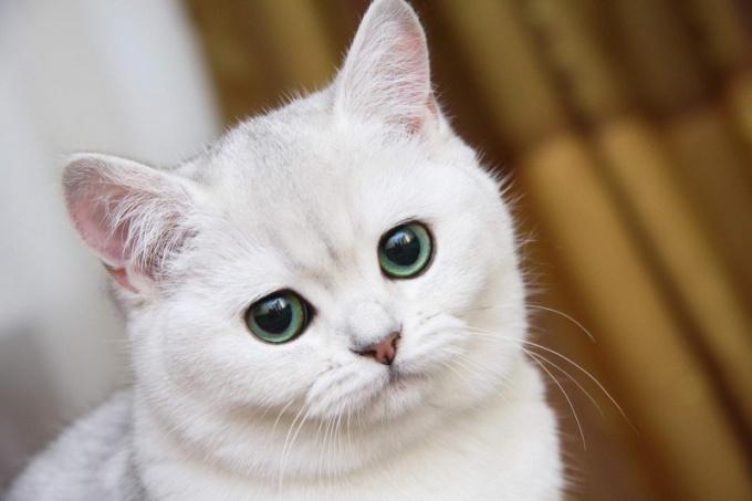 Экстрасенсорные способности кошек - это загадка современности!