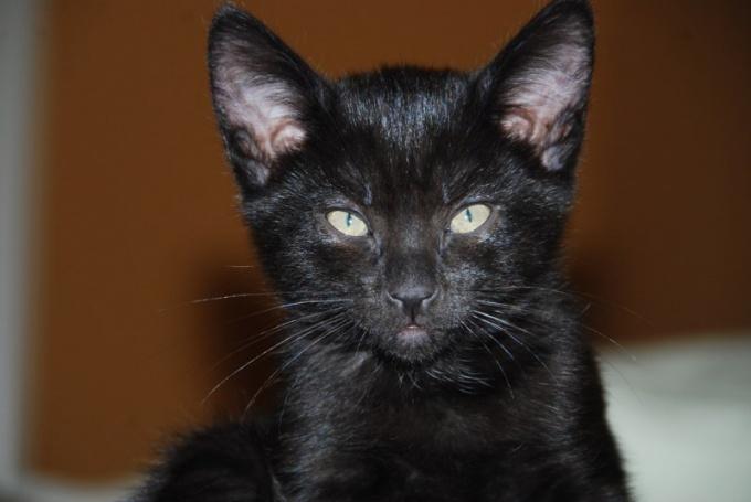 Кот, черный, особенный