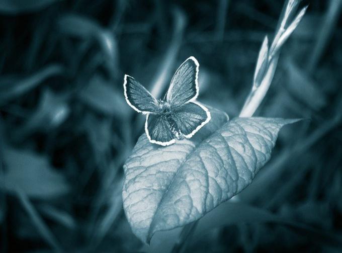 """Что такое """"эффект бабочки"""""""