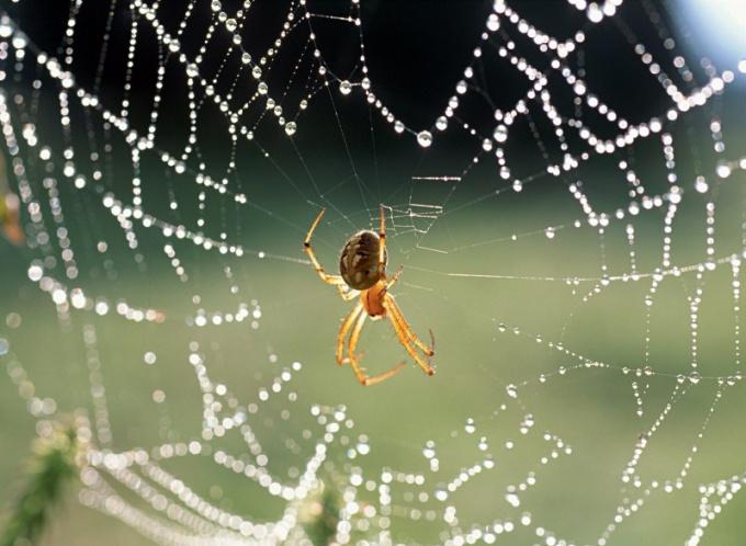 По поведению паука в природе можно определить погоду