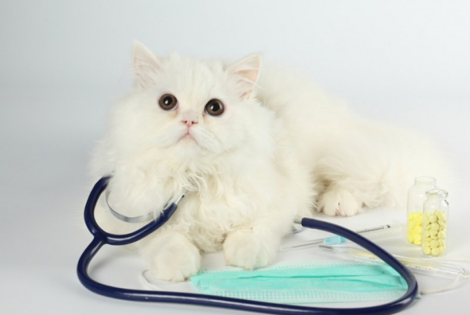 Как коту похудеть