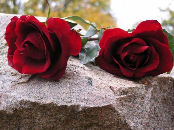 Какие цветы принести на похороны