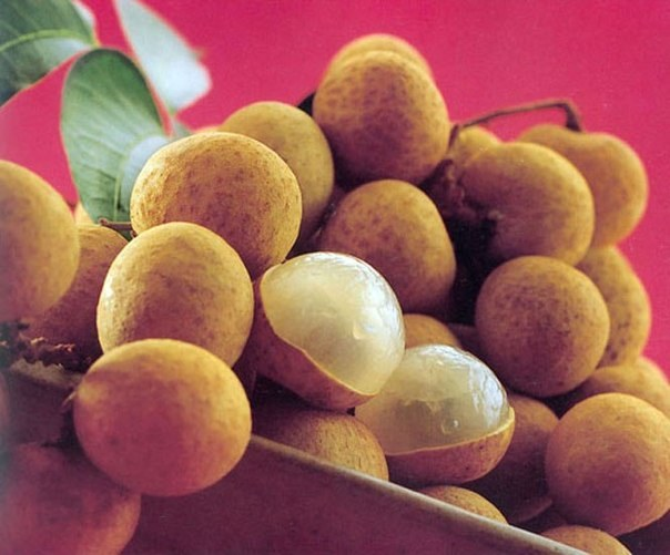 Выращивание лонгана в домашних условиях из косточки