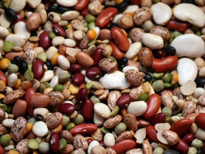 Все о бобовых растениях
