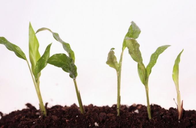 Какие бывают корневые системы растений