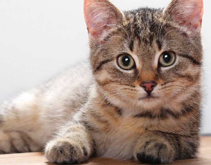 How to calculate date of birth in the cat