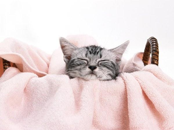как не допустить пересыхания глаз у кошки во время действия наркоза