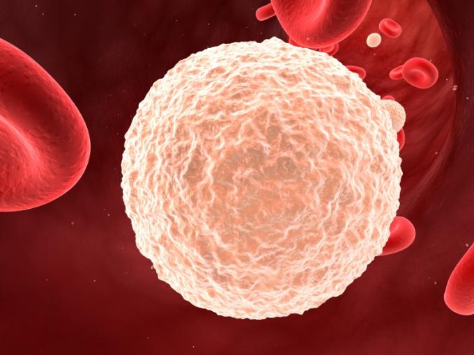 Норма лейкоцитов в крови.