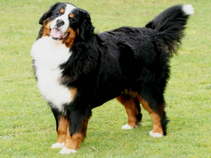 How to find out breed of dog