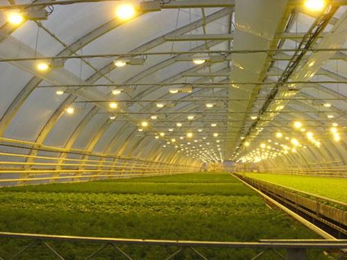 Энергосберегающие лампочки используются повсеместно