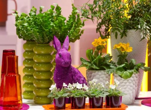 Топ-5 комнатных растений для лентяев