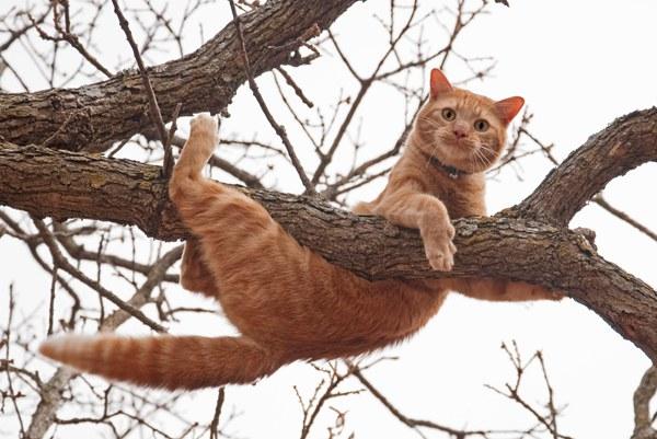 Кошки тоже боятся высоты