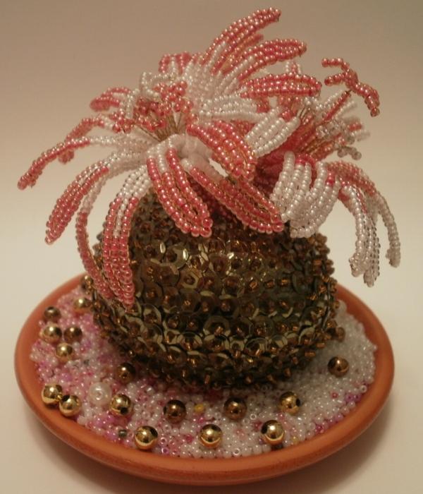Установка кактуса