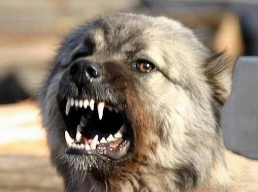 Чем опасны собачьи укусы