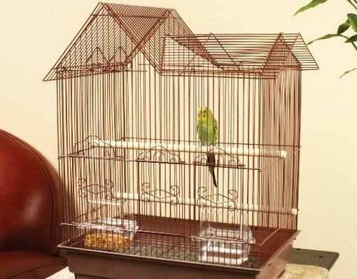 Как оборудовать клетку для попугая