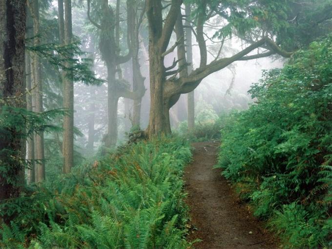Мифы и легенды о папоротнике