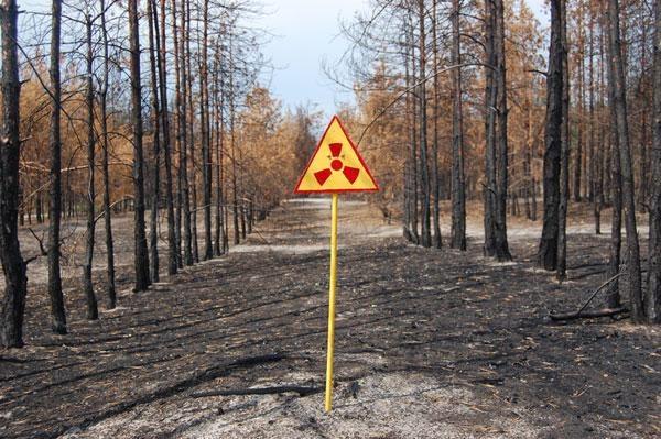 В зараженном радиацией чернобыльском лесу погибли деревья