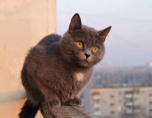 Что делать, если кошка выпала из окна