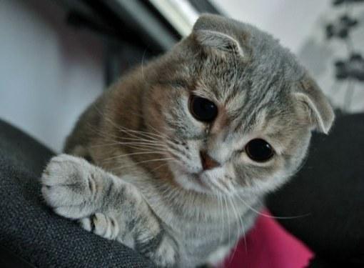 кот чихает из носа темные выделения