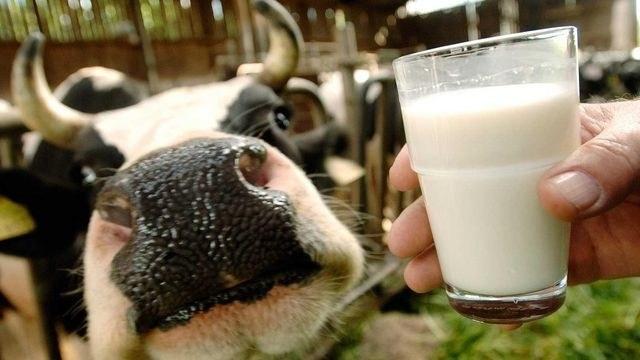 Какое молоко считается парным