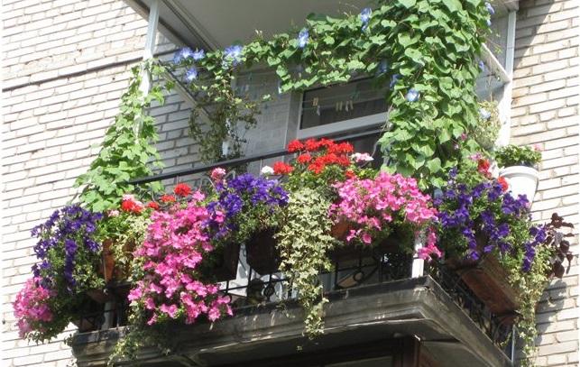 Как выбрать контейнер для выращивания растений на балконе