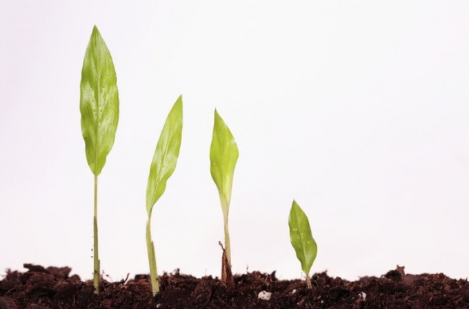 Что такое вегетативные органы растений