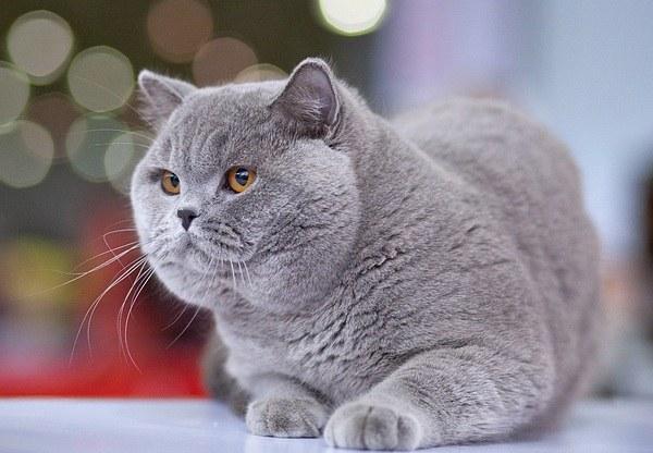 как можно назвать котёнка мальчика рыжего цвета