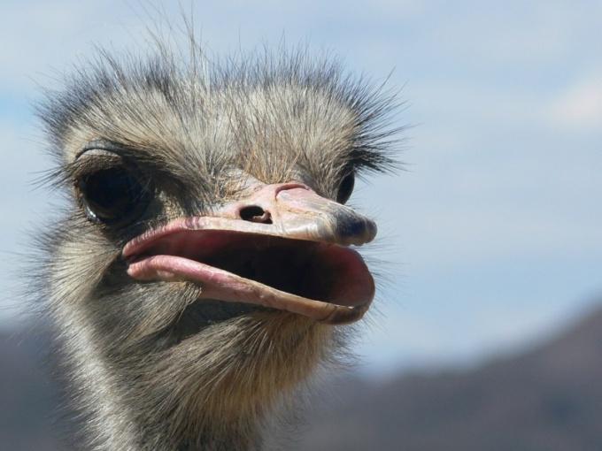 Какая птица самая большая на планете
