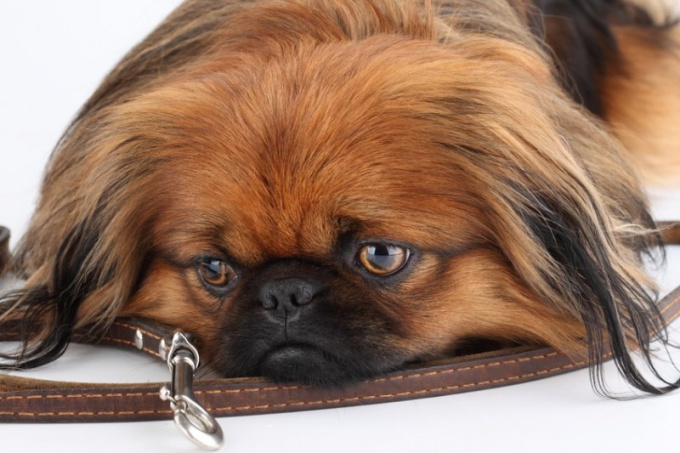 """What """"signals"""" dry nose in dogs"""