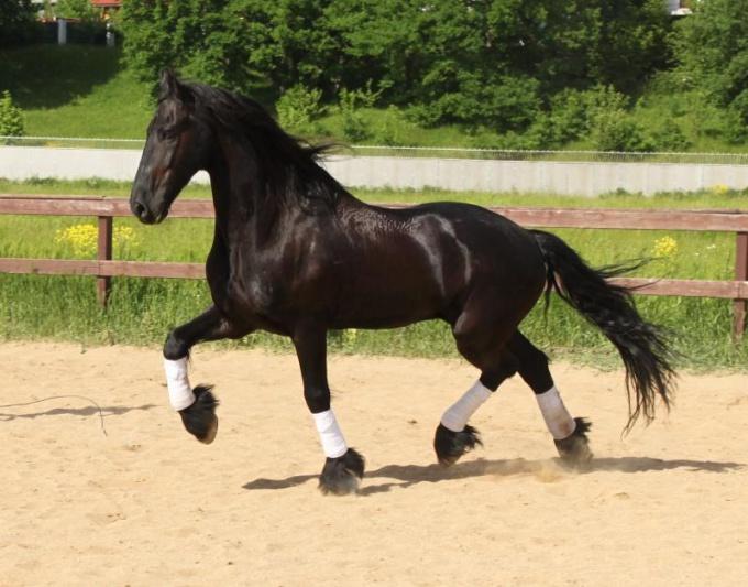 Лошадь-фриз