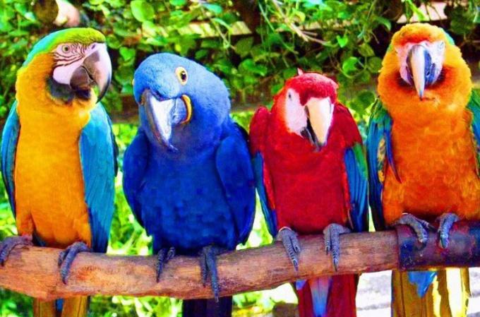 Сколько стоят попугаи