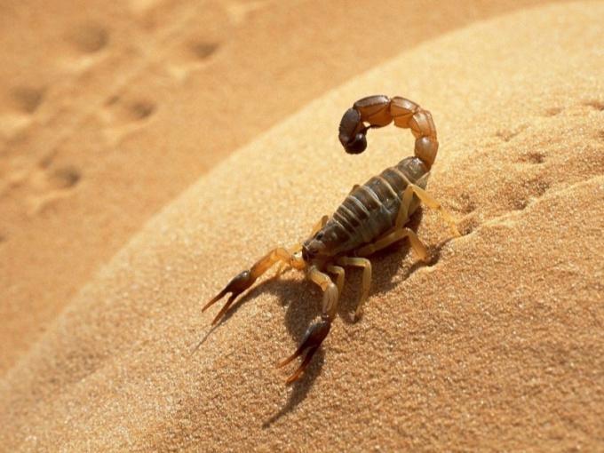 Какие животные живут в пустыне Сахара