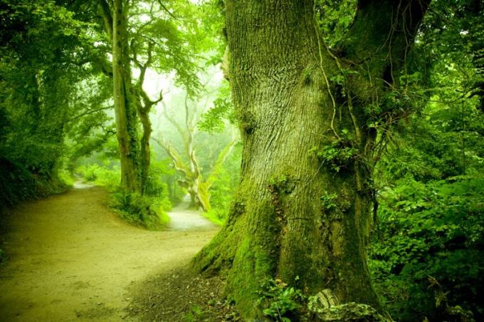 Какое значение у растений в природе