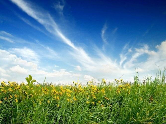 Какие растения растут в степях России