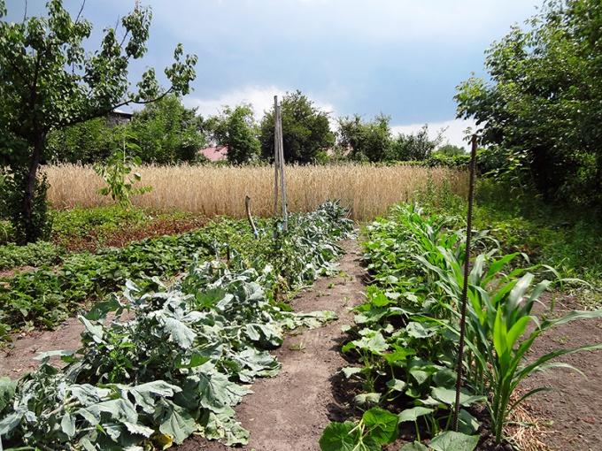 Какие растения посадить рядом