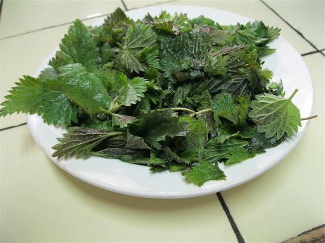Что приготовить из молодой крапивы: примитивные и пригодные рецепты