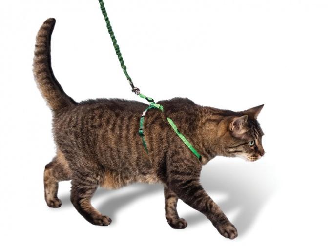 Ошейник для кошек своими руками 64