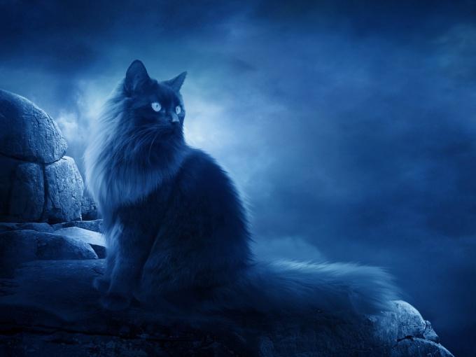 Кошки умеют предчувствовать - так ли это?