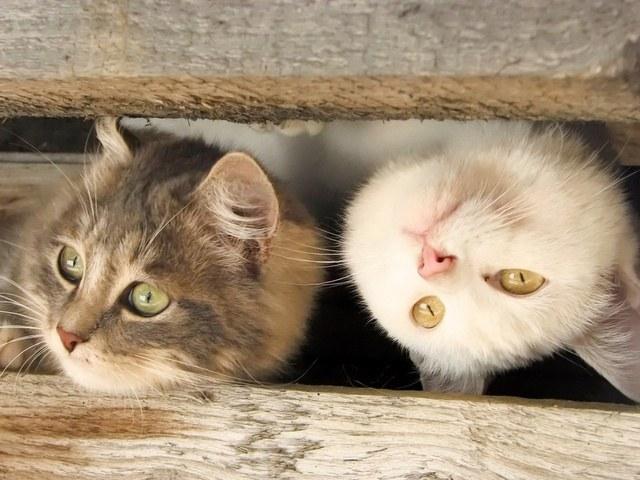 Какие самые популярные цитаты о кошках