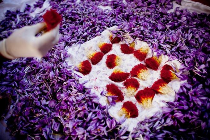 Шафран – король среди пряностей