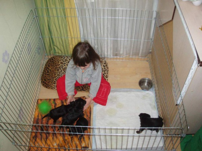 How to make a playpen for puppies