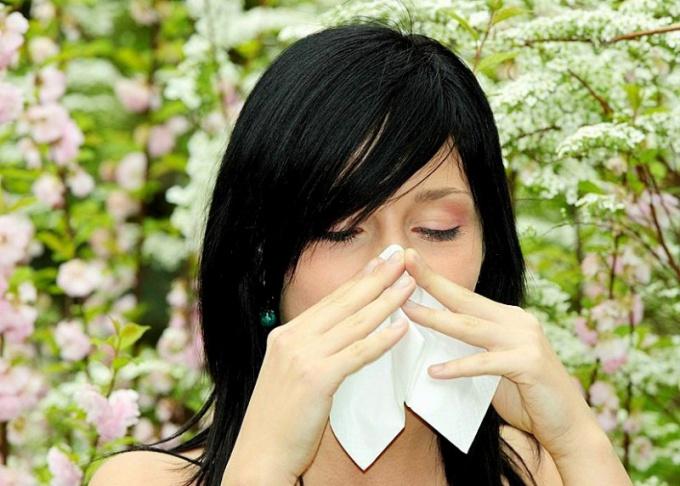 Массовая аллергия на цветение растений вспыхивает весной и заканчивается глубокой осенью